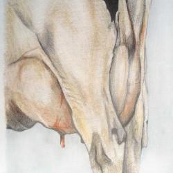 Das Hinten der Kuh, 2009